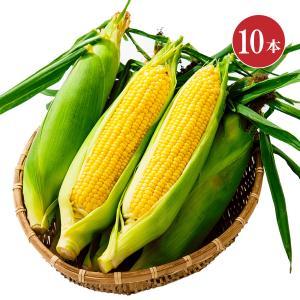笹崎さんちのとうもろこし 恵味ゴールド 1箱 10本入り 約5.5kg 送料無料 送料込 同梱不可 ☆8月中旬より収穫次第、順次発送予定 hokkaido-loco