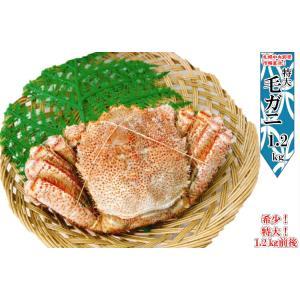 毛ガニ 特大 ジャンボ 1.2kg 毛がに カニ かに  海鮮ギフト 母の日 特大 kani 札幌 場外市場 訳あり 父の日 ギフト|hokkaido-okada