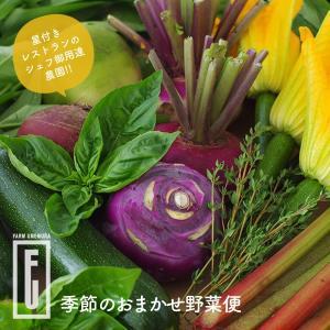 送料込 千歳市ファームウメムラ 季節のおまかせ野菜便 北海道 お土産