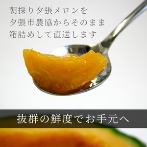 夕張メロン 共選 優品中玉(約1.3kg) 1玉(代引不可)|hokkaidogb|03