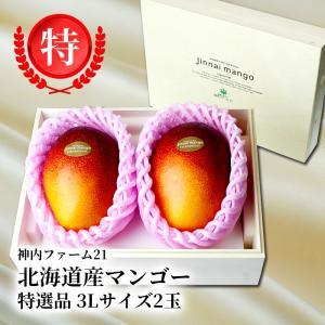 クリスマス 北海道産 神内マンゴー 3Lサイズ 特秀品 2玉 アップルマンゴー アーウィン種 送料無料 お中元ギフト 着日指定不可 のし対応 お取り寄せ|hokkaidogb