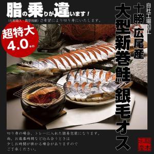 【送料無料】北海道十勝 広尾産 大型 新巻鮭 銀毛オス1本物(化粧箱入・真空包装)4kg前後|hokkeya