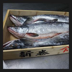 【送料無料】北海道十勝 広尾産 大型 新巻鮭 銀毛オス1本物(化粧箱入・真空包装)4kg前後|hokkeya|02