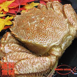 送料無料 北海道 オホーツク産 堅毛ガニ姿(超大型)750g前後×2杯|hokkeya