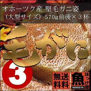 送料無料 北海道 オホーツク産 堅毛ガニ姿(大型サイズ)570g前後×3杯|hokkeya