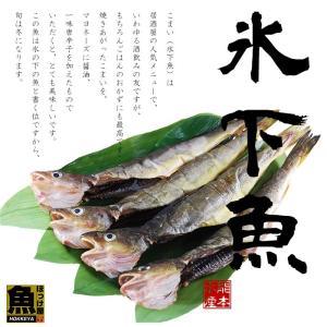 北海道産 丸干しこまい 一夜干し 12尾 (4尾×3串)|hokkeya|03