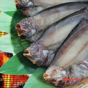 北海道(根室産)なめたがれい 一夜干し 特大サイズ 1枚|hokkeya