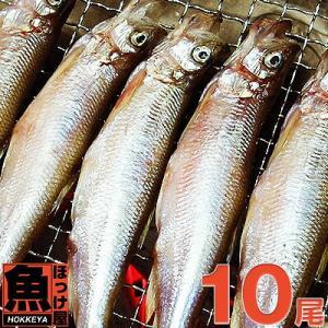 北海道(広尾産)ししゃも オス 大サイズ 10尾 【本ししゃも】|hokkeya