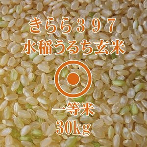 令和元年産 きらら397 玄米 30kg 一等米 北海道米