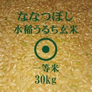 令和元年産 ななつぼし 玄米 30kg 一等米 北海道米 特A米