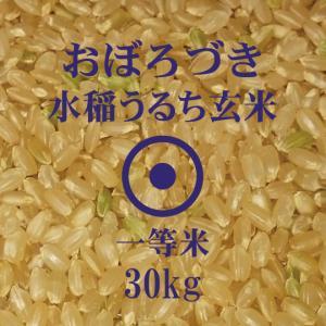 令和元年産 おぼろづき 玄米 30kg 一等米 北海道米