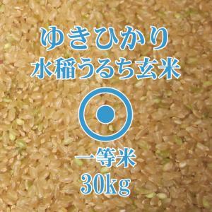 令和元年産 ゆきひかり 30kg 玄米 一等米 北海道米 イエス!クリーン米