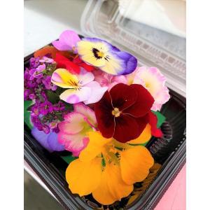 エディブルフラワー 食べるお花 とれたて 鮮度抜群 産地おまかせパック(約20輪入り) 食用花 産直 5〜7品種のミックス ギフト 贈答用 お中元
