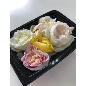 エディブルフラワー エディブルローズ 食べるお花 バラ 薔薇...