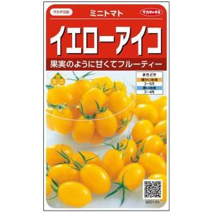 サカタ交配 ミニトマト イエローアイコ 約13粒 実咲野菜