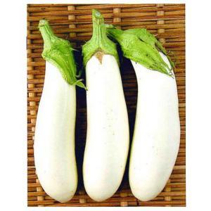 野菜の種 ナス 越後白なす 小袋1.5ml|hokuetsunoji-shop