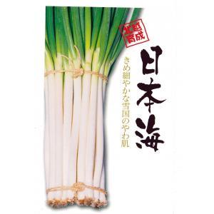 野菜の種 ネギ 日本海 20ml|hokuetsunoji-shop