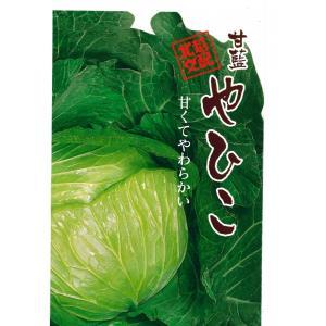 野菜の種 キャベツ やひこ 1.8ml|hokuetsunoji-shop