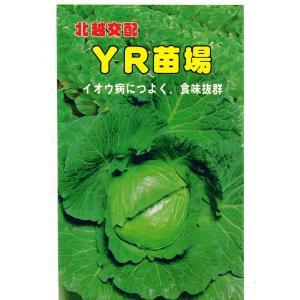 野菜の種 キャベツ YR苗場 1.3ml
