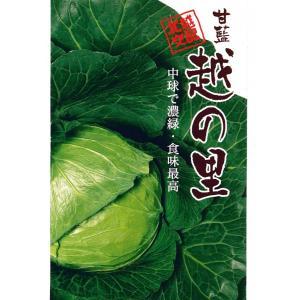 野菜の種 キャベツ 越の里 1.8ml|hokuetsunoji-shop