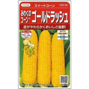 サカタ交配 みわくのコーン ゴールドラッシュ 28ml 実咲野菜