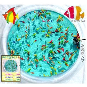 泳ぐお魚簡易セット hokulea