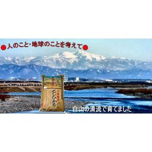 送料無料 加賀百万石 お米 こしひかり 厳選コシヒカリ 令和元年産 石川県産  食用 玄米 30kg|hondanojo|02