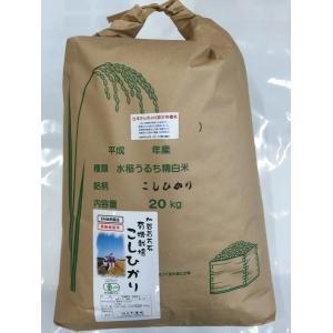 無農薬 お米 有機米 コシヒカリ 自然農法 29年産 新米 石川県産 辻本さんの有機栽培米 コシヒカリ 白米 20kg 送料無料|hondanojo