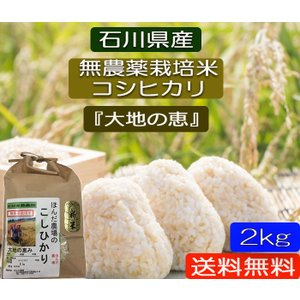無農薬 お米  自然農法 栽培米 こしひかり 平成29年産  「大地の恵」 白米 2kg お試し版 (初回送料無料)|hondanojo
