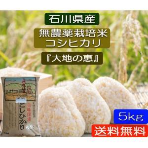 無農薬 お米  自然農法 栽培米 こしひかり 平成29年産  「大地の恵」 白米 5kg|hondanojo