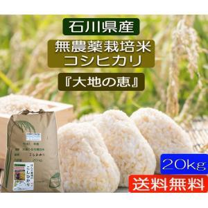 無農薬 お米  自然農法 栽培米 こしひかり 平成30年産  「大地の恵」 白米 20kg|hondanojo