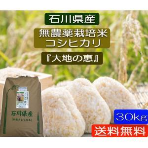 無農薬 お米  自然農法 栽培米 こしひかり 平成30年産  「大地の恵」 白米 30kg|hondanojo