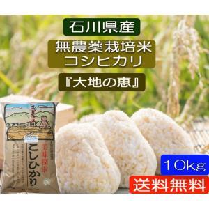 無農薬 お米  自然農法 栽培米 こしひかり 平成29年産  「大地の恵」 白米 10kg|hondanojo