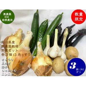 無農薬夏野菜セット1000|hondanojo