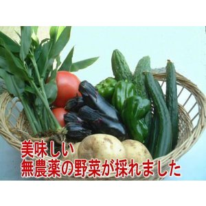 無農薬夏野菜セット1800|hondanojo