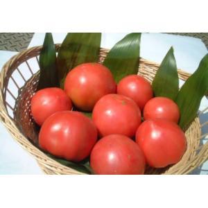 有機栽培完熟トマト3〜4個)|hondanojo