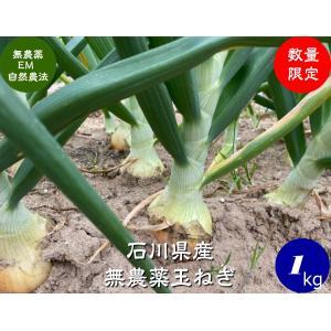 無農薬玉ねぎ3-5個200g|hondanojo