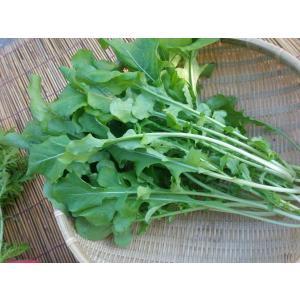 芳香野菜有機ルッコラ100g|hondanojo