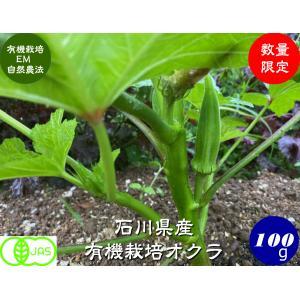 有機栽培オクラ100g|hondanojo