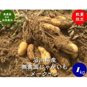 無農薬ジャガイモ(メークイン)1kg hondanojo