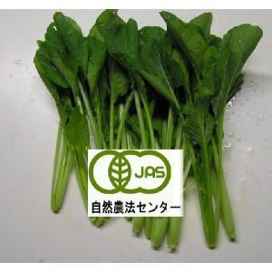 有機栽培小松菜200g|hondanojo