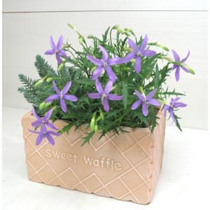 【当店農場生産】イソトマ ブルー 9cmポット苗 かわいい花が咲きます♪|honeymint