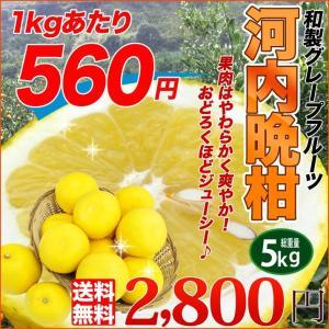 送料無料 柔らかで瑞々しい希少柑橘 河内晩柑橘 5kg 別名 ジューシーオレンジ 美生柑