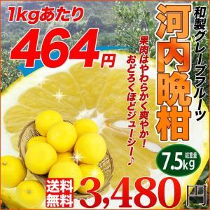 送料無料 柔らかで瑞々しい希少柑橘 河内晩柑 7.5kg 別名 ジューシーオレンジ 美生柑