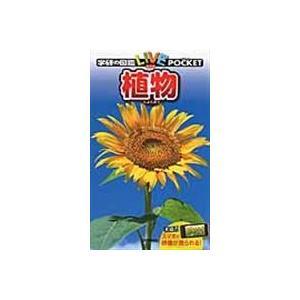 植物/樋口正信