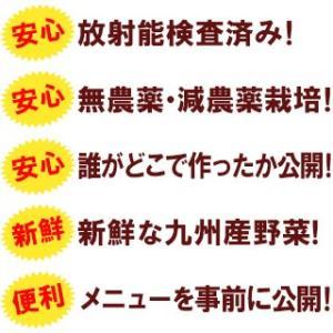 [送料込み]九州 野菜セット12品(オマケ野菜 高級卵含む)  放射能検査済み|hopperu|03