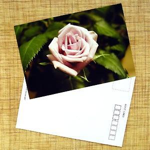 花のポストカード バラ(ピンク)B|horiya-studio