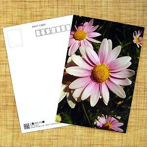花のポストカード マーガレット(ピンク)B|horiya-studio