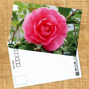 花のポストカード サザンカ(ピンク)1|horiya-studio