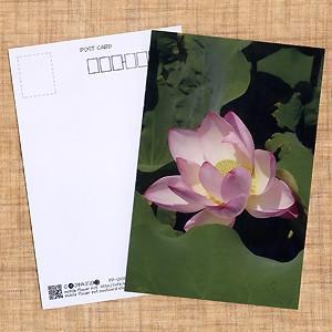 花のポストカード ハス(ピンク)B|horiya-studio